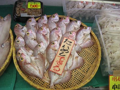 昼網の新鮮な魚がたくさん並んでいます