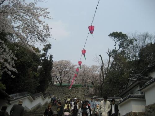 岡山県津山市の鶴山公園にお花見に行きました