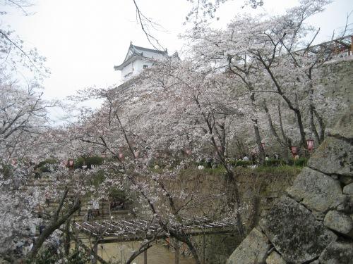 娘の高校時代の先生である、赤田進先生が、場所取りをしてくれました