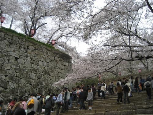 外国人も多く、津山の町も国際的になったようです