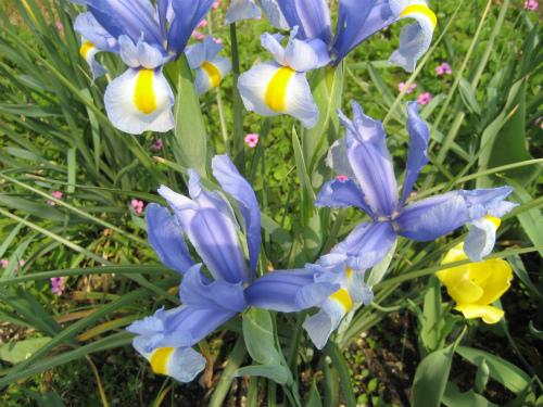 5月の花が、もうすでに咲き始めています