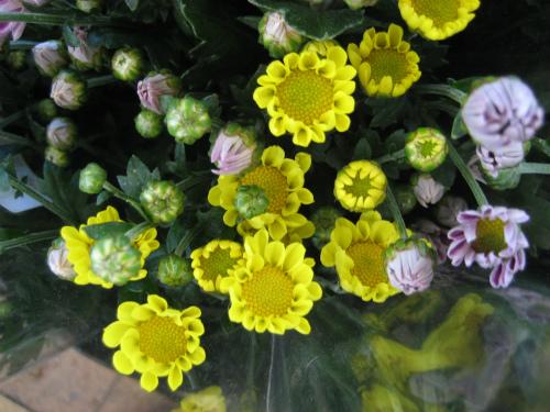 北区のJA兵庫六甲「農野花」