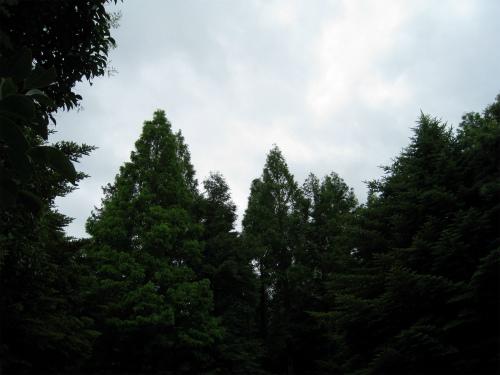 六甲森林植物園