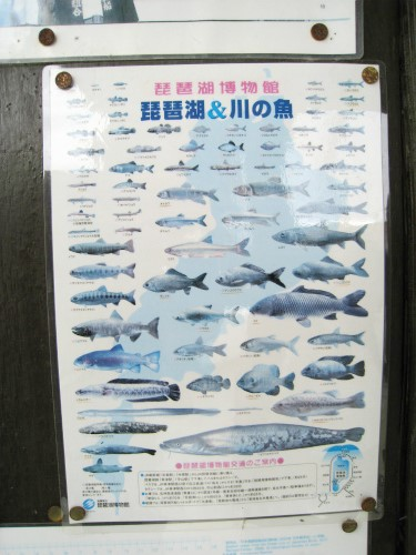 近江八幡水郷巡り