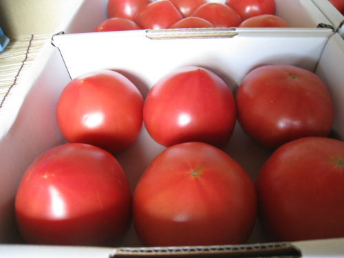トマト水耕栽培