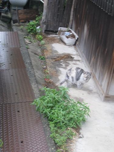 野良猫 ノラネコ