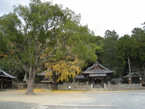 市民の木 銀杏